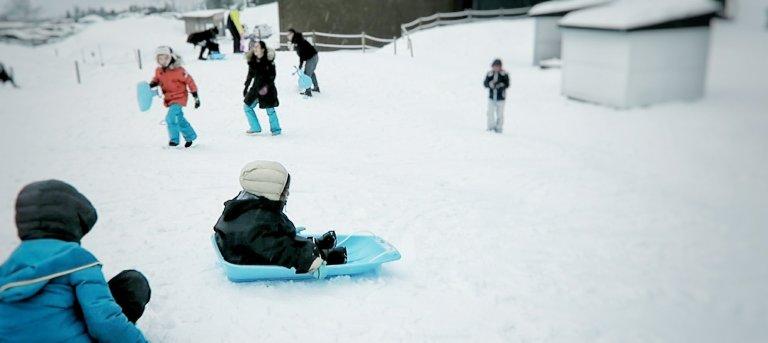 tomamu sled